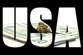 Marijuana and Cannabis USA — Stock fotografie