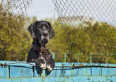 A German dog — Stock Photo