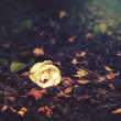 Rose lays on autumn leaves — Stock Photo #30651981