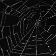 Spiderweb black background — Stock Photo