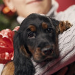 A puppy for Christmas — Stock Photo