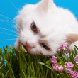 Cat eating grass — Stock Photo #40207685