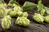 Hops lying on the beer barrel oak — Stock Photo