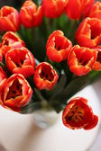 Tulips, red tulips — Stock Photo