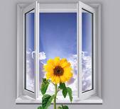 Window with sunflower — Stock Photo