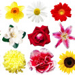 Stock Photo: Clipart flowers