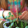 Child care the plant — Foto de Stock