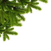 Zielone gałęzie jodły — Zdjęcie stockowe