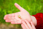 Snail in the hand — Stock Photo