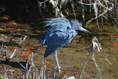 Ruffled Blue Feathers — Stock Photo