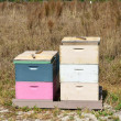 Stock Photo: Honeybee Hives 2