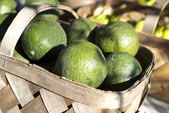Avacado Basket — Stock Photo