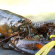 Fresh Maine Lobster — Stock Photo