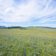 Stock Photo: Hogback Meadow
