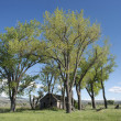 Cottonwood Homestead — Stock Photo #35947449
