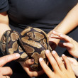 Постер, плакат: Children pet a snake