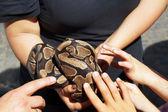Children pet a snake — Stock Photo