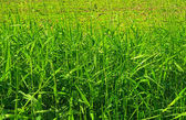 Grass scenery on the field — Stock Photo