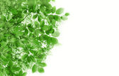 Abstract background with green leaves — Stock Photo