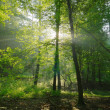Stock Photo: Dawn in the summer forest