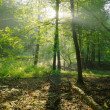 Dawn in the summer forest — Stock Photo