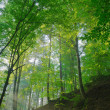 Stock Photo: Sun shining on forest slope