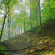 Forest stream with sunrays — Stock Photo