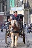 Cavallo e carro — Foto Stock