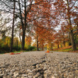 Autumn leaves promenade — Stock Photo