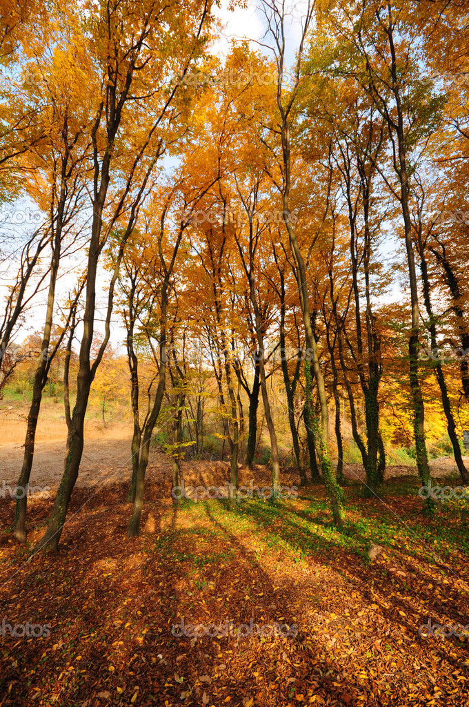 Autumn trees in curve perspective with vivid colors — Stock Photo #19705391