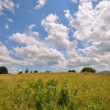 Fields landscape — Stock Photo #19712559