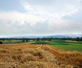 Panorama di paglia — Foto Stock