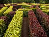 Garden labyrinth — Stock Photo