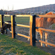 Horses behind a fence in the light of the sunset — Stock Photo