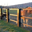 Horses behind fence in light of sunset — Stock Photo #25246833