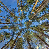 Trees from below — Stock Photo
