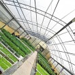 Greenhouse with green plants view from different angle — Stock Photo