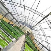 Serra con piante verdi vista da diversa angolazione — Foto Stock