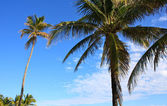 Beach in Miami — Stock Photo