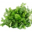 Cilantro isolated on white — Stock Photo