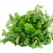 Stock Photo: Cilantro isolated on white