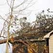 Tree on Roof — Stock Photo #24053303