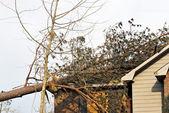 Tree on Roof — Stock Photo