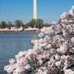 Washington Monument — Stock Photo #24212119