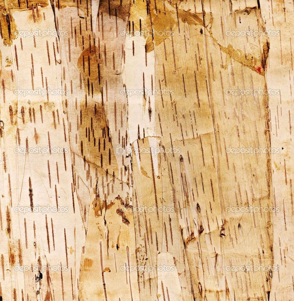 白桦树树皮背景.高分辨率扫描– 图库图片