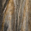 Bark of an old tree in the park — Stock Photo