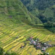 Stock Photo: Rice terraces in Batad