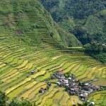 Rice terraces in Batad — Stock Photo #19944839