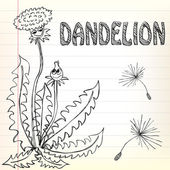 Dandelion doodle — Stock Vector