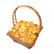Isolated busket of chanterelle mushrooms — Stock Photo